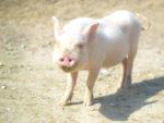 鼻の存在感を消すメイクとは?豚鼻を目立たなく隠す!実践してる方法を公開